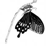 Ch8_2_Butterfly