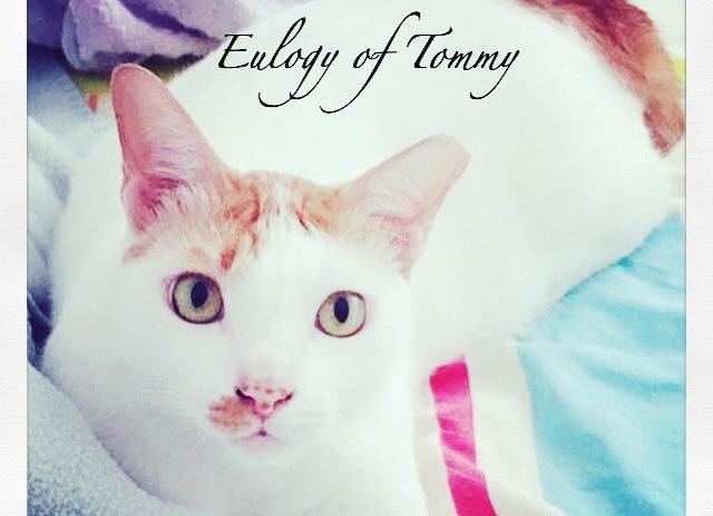 Eulogy of Tommy
